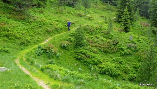 Weg zurück zur Waldheimhütte