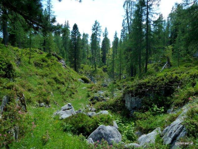 Am Weg zum Hirzberg