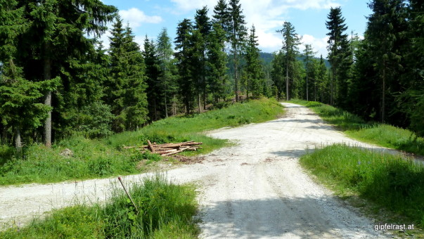 Wegkreuzung im Wald: Die Straße geradeaus ist auf meiner Karte noch als schmaler Wanderweg verzeichnet :(