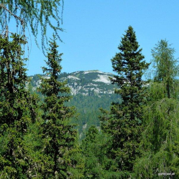 Der Wald gibt zwischendurch den Blick auf den Hirzberg frei