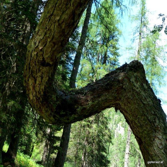 A bisserl verwoadackelt, wie man in der Steiermark sagt