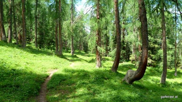 Wunderbare Wälder