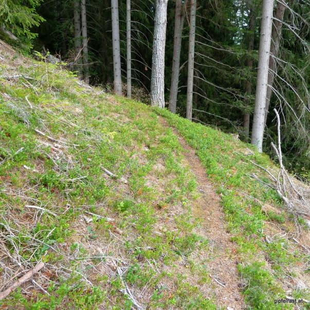 Zum Glück wurden noch nicht alle Wanderwege zu Forstautobahnen ausgebaut...