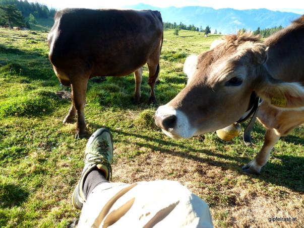 Kopflos und Kurzsichtig: Resi rechts wird in wenigen Augenblicken meine Schuhe mit frischem Gras verwechseln