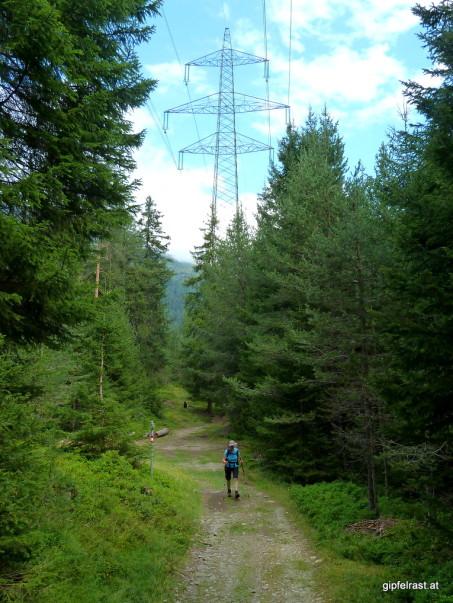 Unter Hochspannung im Pillerwald