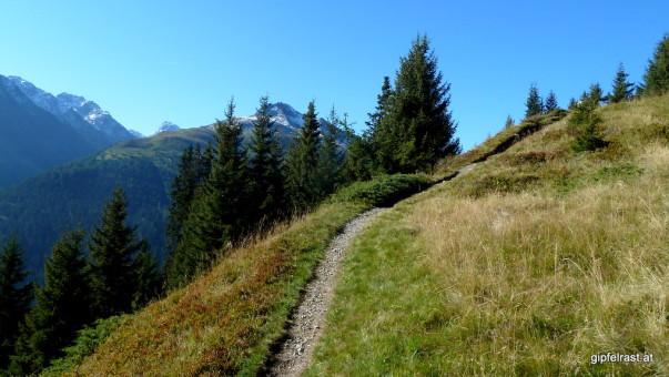 An der Waldgrenze