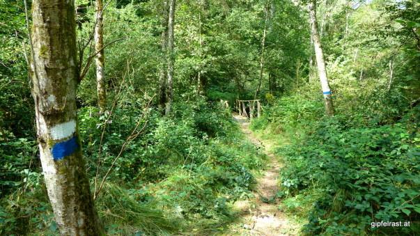 Dschungel-Feeling