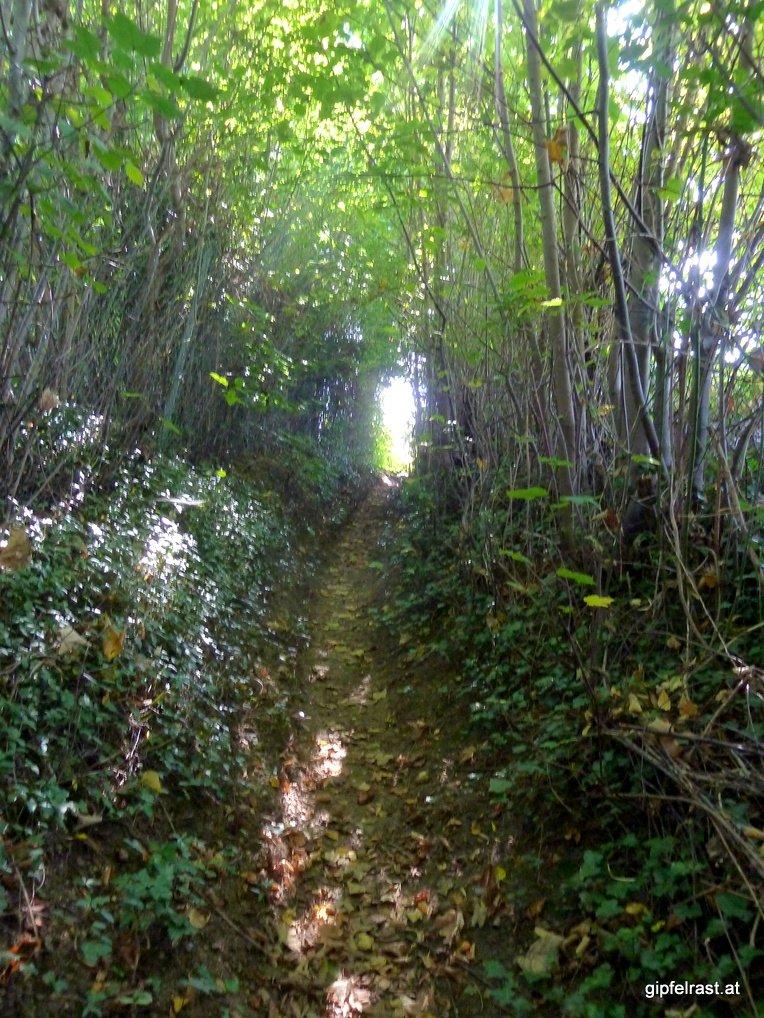 Licht am Ende des grünen Tunnels