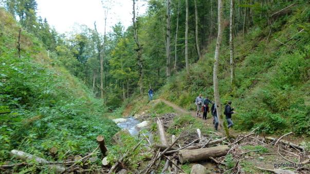 Es wird noch eine Dekade dauern, bis hier wieder durch schattige Buchenwälder gewandert werden kann.