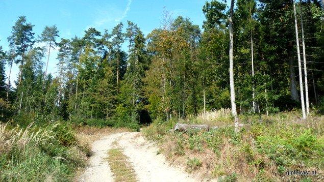 Im Hinterland des Urwalds tun sich feine Wanderwege auf