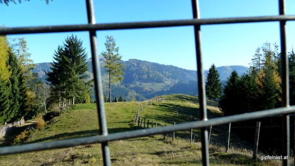 Hinter Gittern, welche im Sommer das Almvieh auf der Weide halten