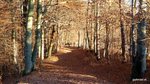 Eine Abkürzung beschert uns diese Waldstraße