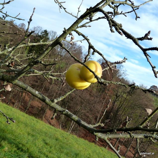 Mehr als einmal stibitzen wir die letzten Äpfel von den Bäumen