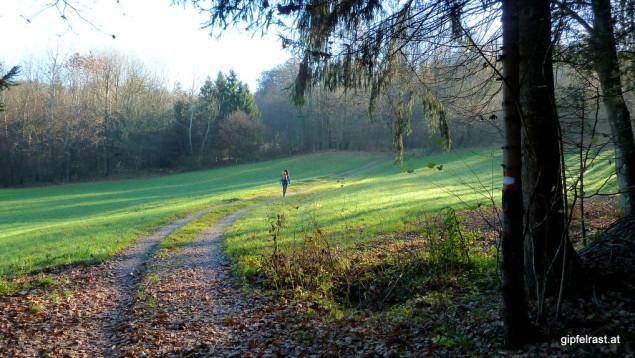 Feld- und Waldwege bringen uns hinauf nach Fernitzberg