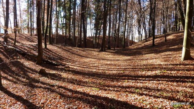 Der Herbst verwöhnt uns heuer bis weit in den November hinein
