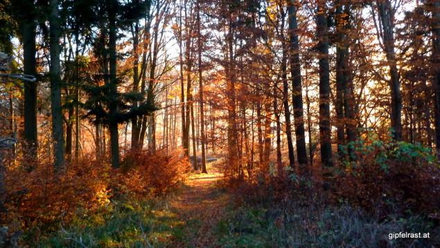 Herbstwald & Sonnenuntergang: Rot voraus