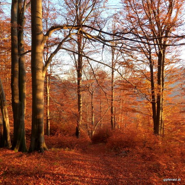 Herbstwald & Sonnenuntergang: Feuer!