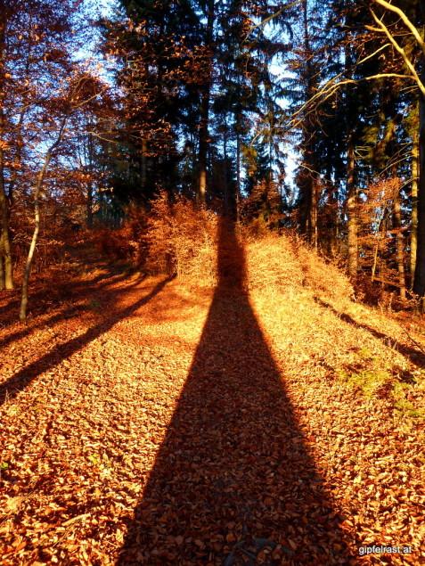 Herbstwald & Sonnenuntergang: Schattenspiele