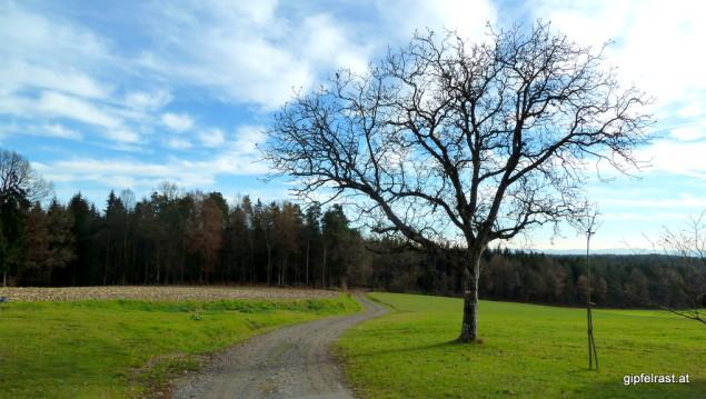 In den Weinburger Wald