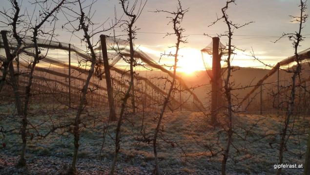 Obst- und Weingärten zeichenen Muster in den Sonnenaufgang