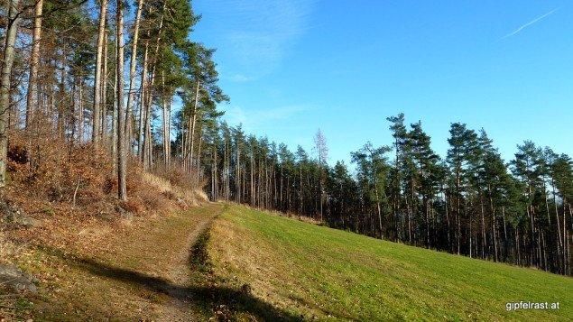 Wege am Waldrand