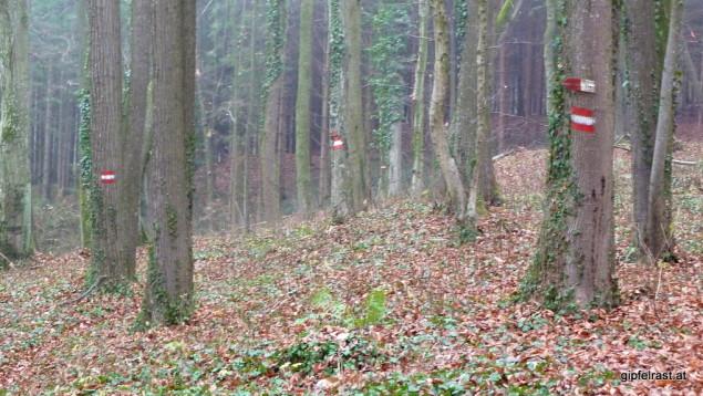 Der Abstieg nach Wolfsberg ist gut markiert. Aber wo ist der Weg?