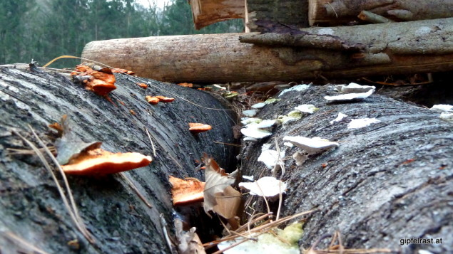 Streng getrenntes Farbensortiment: Die roten Pilze bitte auf den linken Baum, die weißen ausschließlich nach rechts...