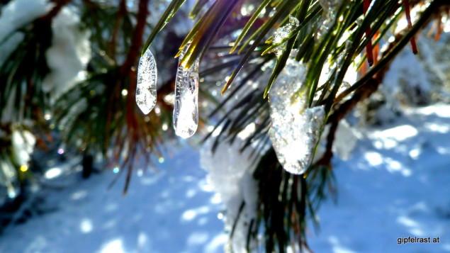 Leuchtende Eiszapfen auf den Bäumen weisen uns den Weg.