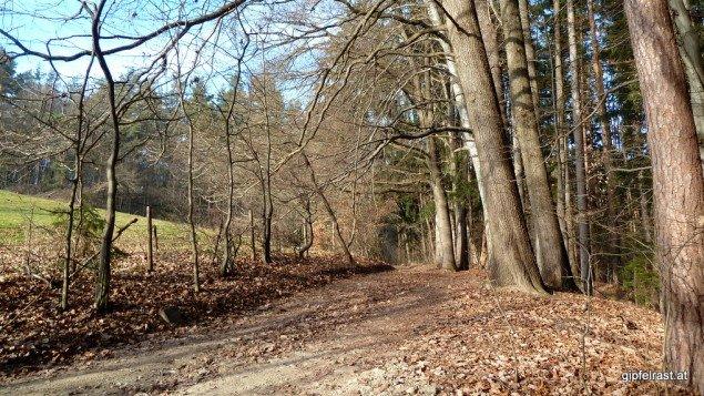 Auf einem gemütlichen Waldweg endet meine Querfeldeinpassage