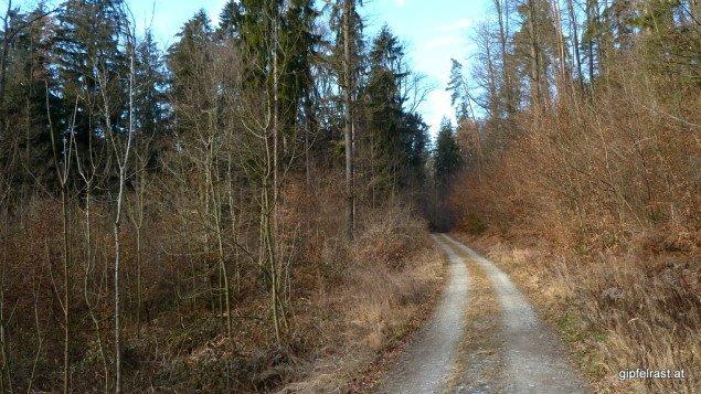 Auch wenn es erst nach Sackgasse aussieht, bringt mir meine Asphaltvermeidungsstrategie einen schönen Forstweg ein.