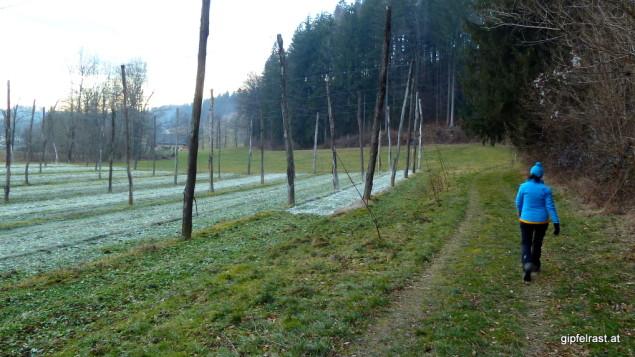 Leutschach ist (so glaube ich) das einzige nennenswerte Hopfenanbaugebiet der Steiermark.