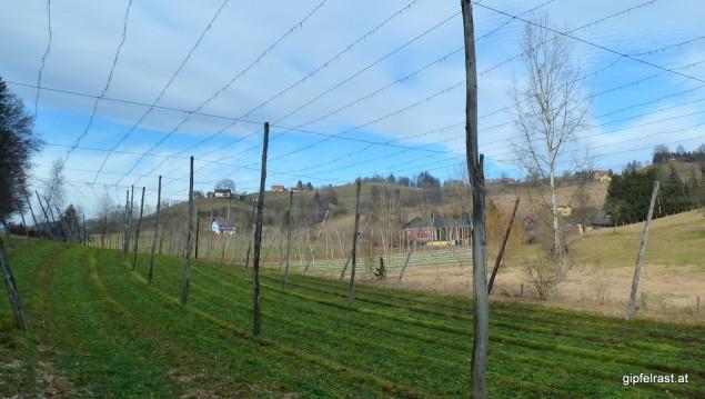 Bier & Wein: Im Sommer verdecken Hopfenranken diesen hübschen Blick auf die Weinberge.