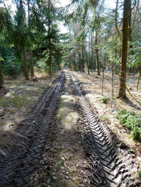 Tiefe Fahrspuren zeugen von fleißiger Arbeit im Wald!