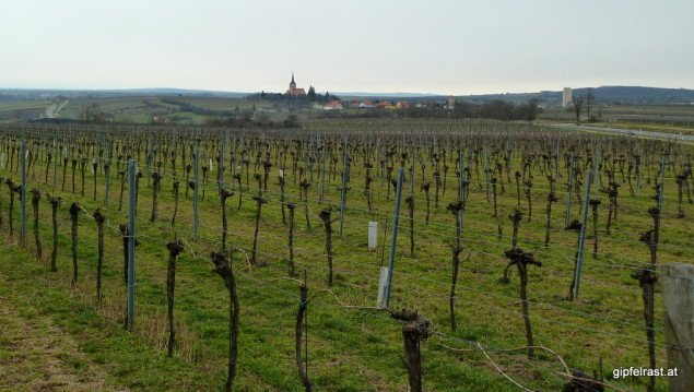Pulkau schon weit hinter uns, der Wein bestimmt heute über weite Strecken das Landschaftsbild.