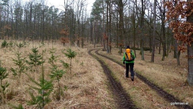Im Totenweib-Wald
