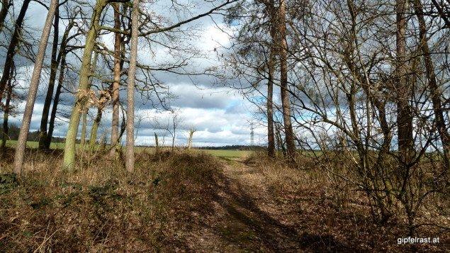 'Wald & Wiese' lautet über weite Strecken das Motto des Wald-Weinviertel-Wegs.