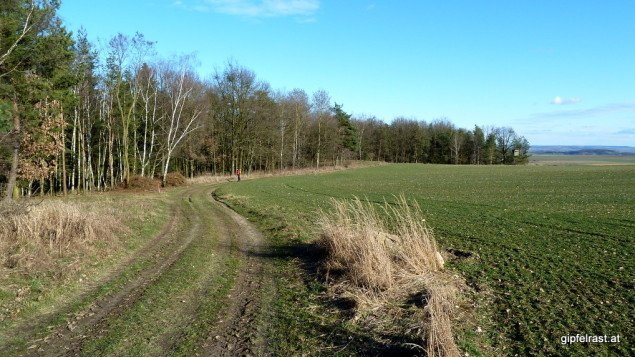Die vielen Waldrandabschnitte geben dem Weg ein besonderes Flair!