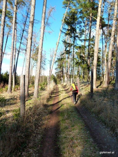 Waldwege ohne Ende