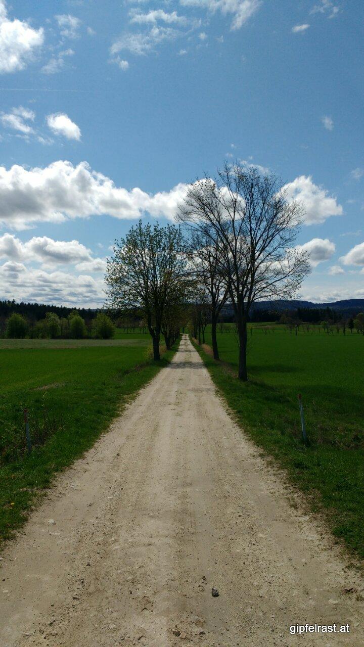 Am Weg zum Friedrichshof