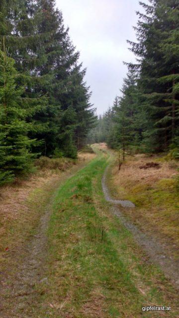 Waldwege zwischen Karlstift und Liebenau