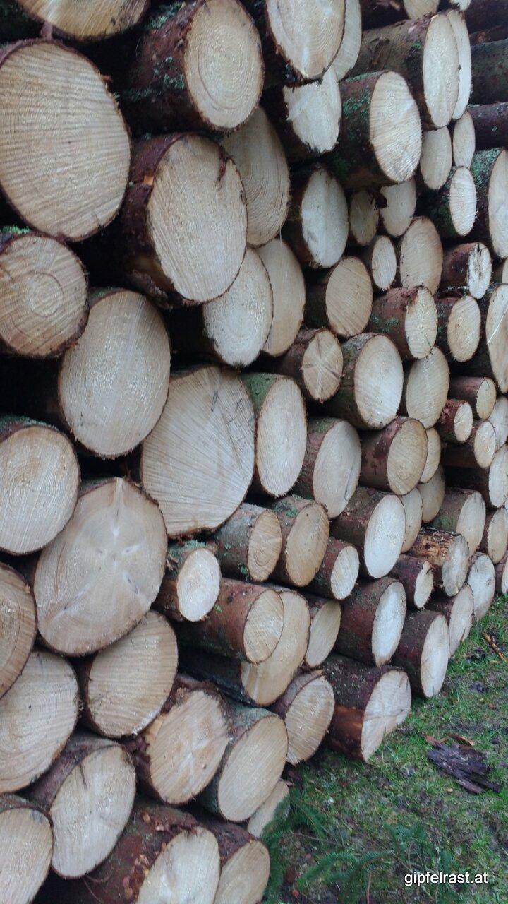 Könnt ihr das frisch geschnittene Holz riechen?