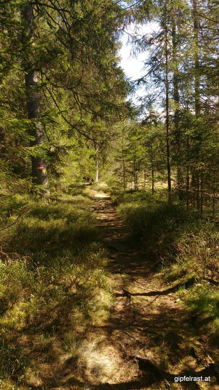 So schön kann Wald sein!