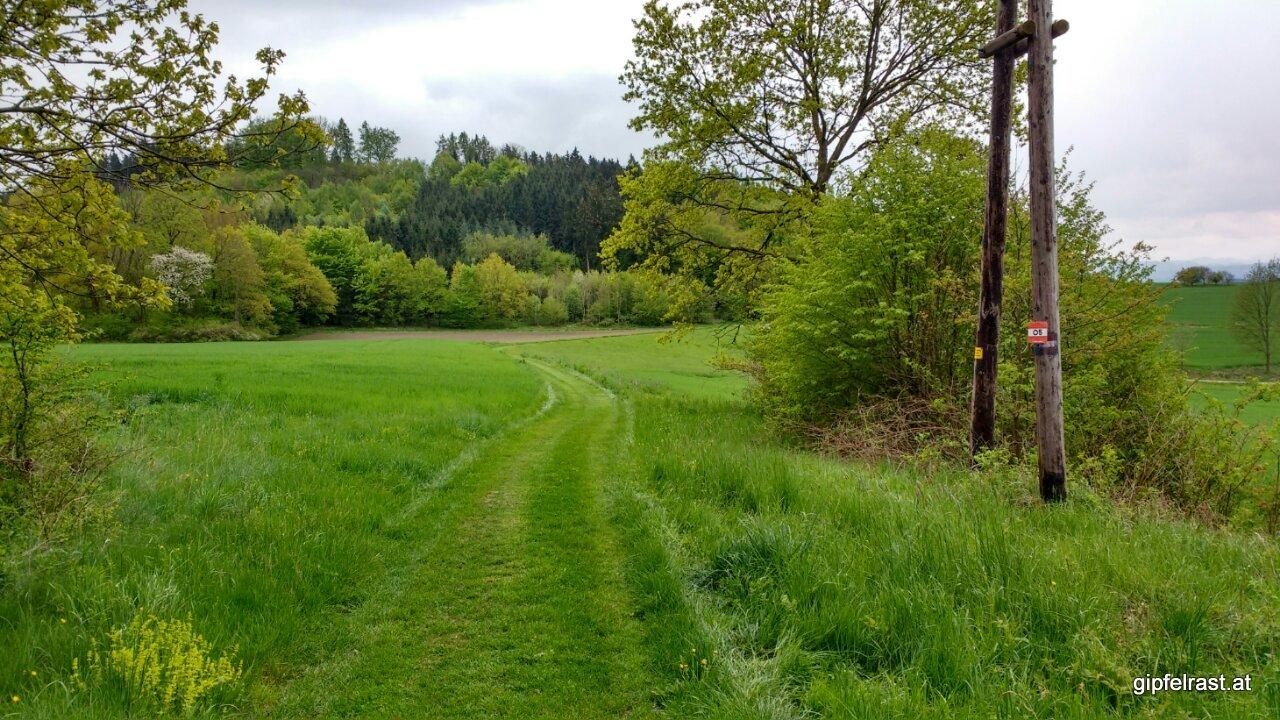 Wie am Grün eines Golfplatzes