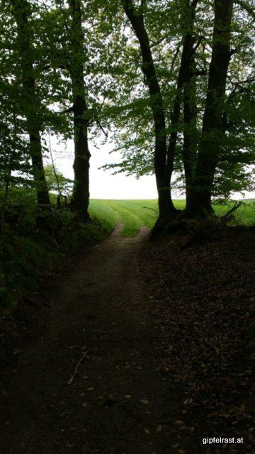 Dunkle Wälder, grüne Wiesen