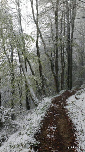 Am Weg hinunter ins Erlauftal hält sich der Schnee in Grenzen
