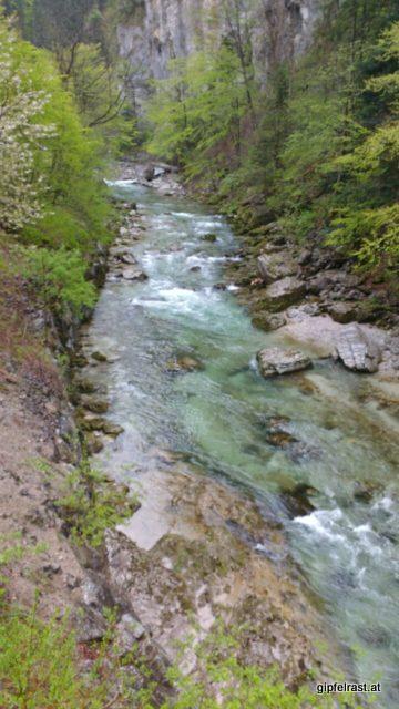 Grün, kalt und laut rinnt die Erlauf durch die Vordere Tormäuer.