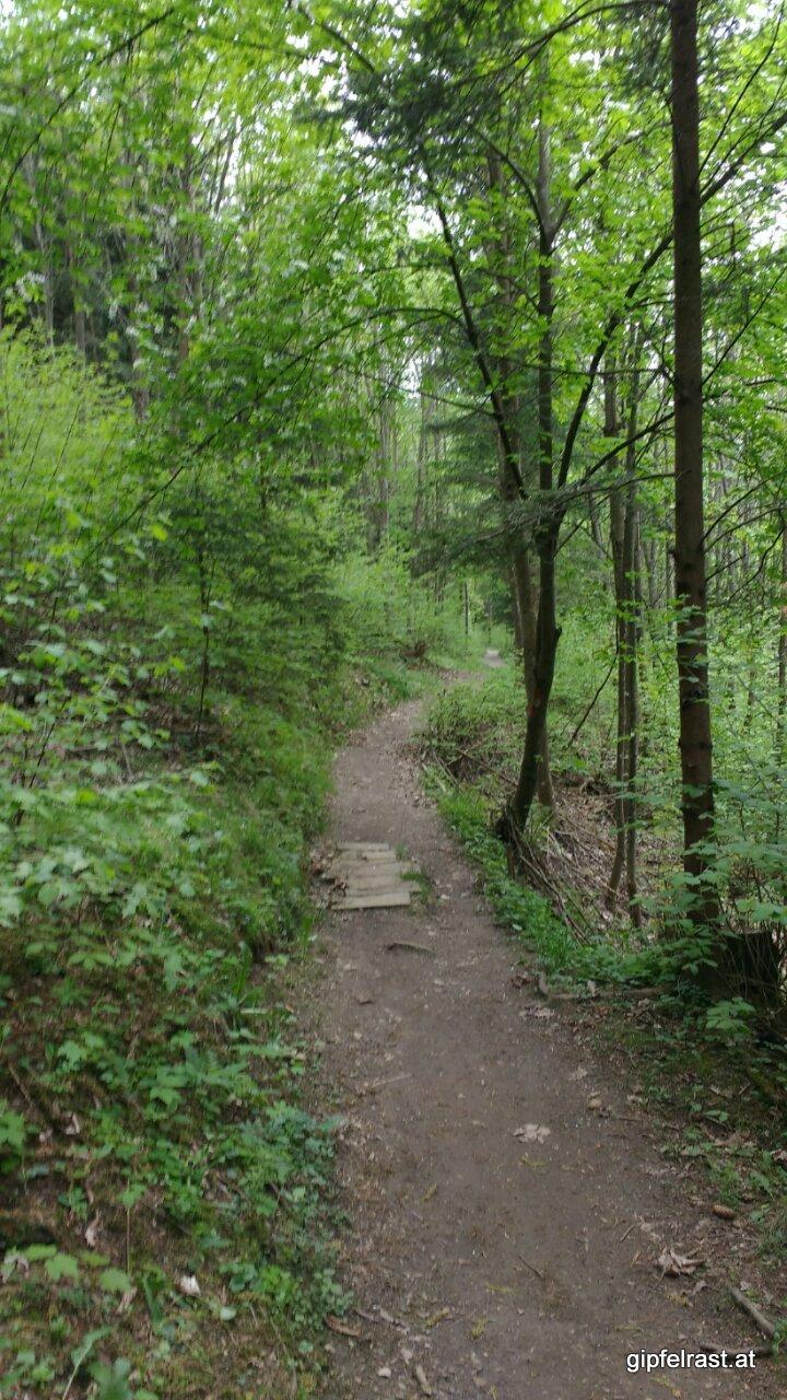 Im Kehrwald
