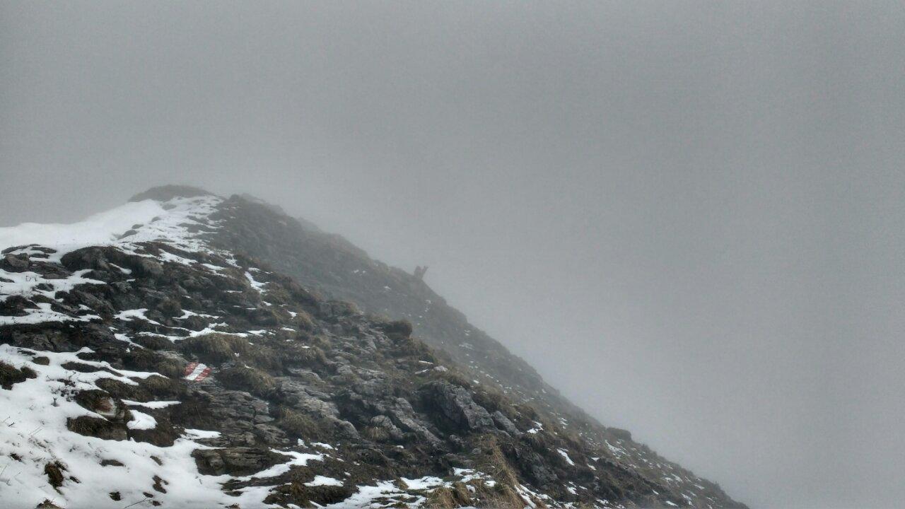 Eine Gams versteckt sich im Nebel...