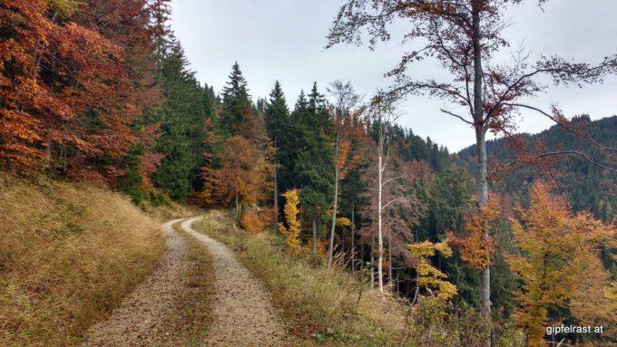 Forststraßen im Herbst