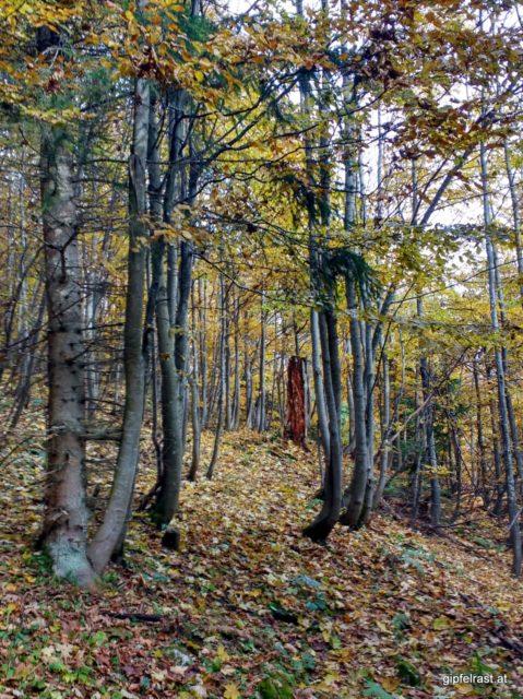 Links sind Bäume, rechts sind Bäume - und dazwischen Zwischenräume...
